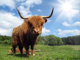 Fototapete - Highland