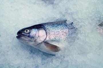 trout female