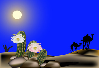 cactus and camels in sand desert