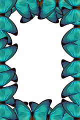 blue butterflies paper