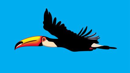 Toucan parrot in flight