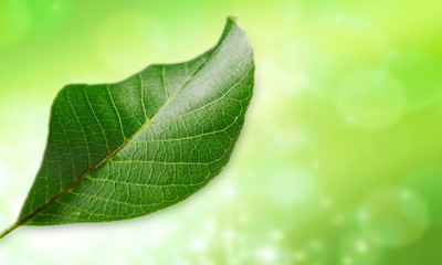 leaf of ecology