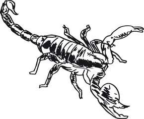 Sketch of Scorpion in combat position. Vector illustration