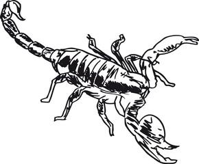 Sketch of Scorpion in combat position. Vector illustration