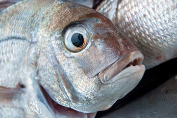 schnapper fresh fish head