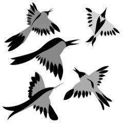 decorative birds drawing on white background