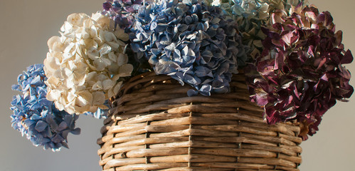dryed hydrangea in composition