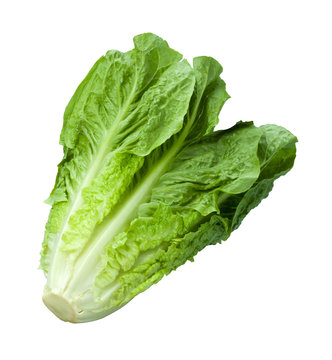 Romain Lettuce isolated on white