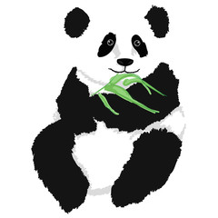 Panda sitting with babmboo branch, on white background.