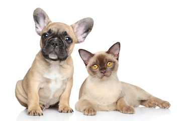 Wall Mural - Dog and cat on a white background