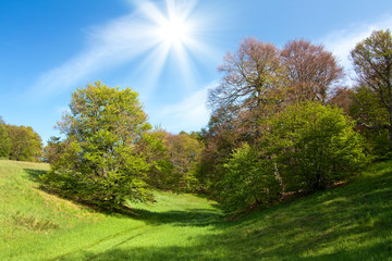 Spring landscape with green grass and trees and blue sky