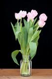 rosa tulpe stockfotos und lizenzfreie bilder auf fotolia. Black Bedroom Furniture Sets. Home Design Ideas