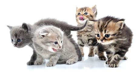 group of little kittens