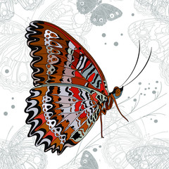 Gorgeous butterfly on a seamless background