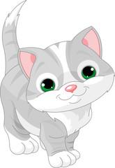 Printed kitchen splashbacks Cats Cute gray kitten