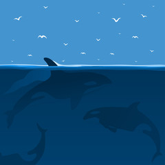 Hunting of whales