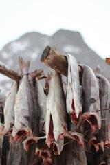 Cod drying in Lofoten