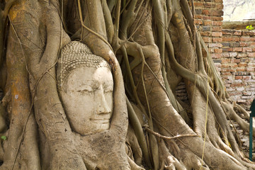 Ancient Buddhism head in root of banyan tree