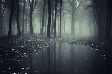 Fotorollo Wald pond in a forest with fog