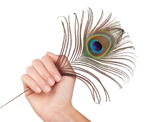 Peacock feather in hand