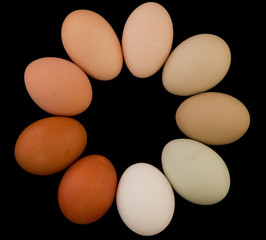 Circle of Eggs