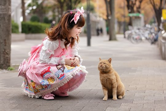 japanese lolita cosplay and cat