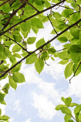 Green Leaves on Summer Sky Background