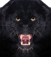 Wall Murals Panther Black Leopard