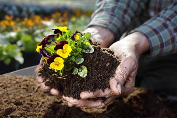 the hands of the gardener