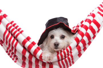 Wall Mural - Adorable puppy wearing a hat