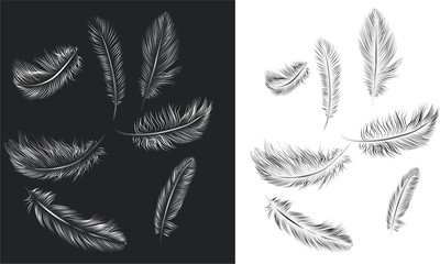 Set of vector feathers
