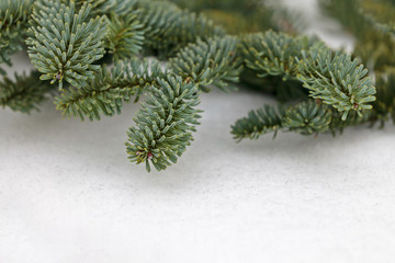Christmas pine tree branches on snow