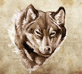 Sketch of tattoo art, Illustration of a Wolf head