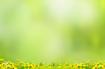 Yellow flowers with beautiful background
