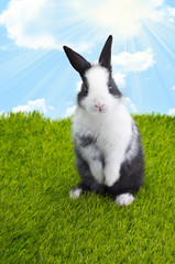 Obraz Little Easter Bunny - fototapety do salonu
