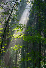 Wall Mural - Sunny morning in the forest