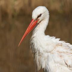 Close-up of a stork