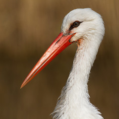 Close-up of a stork