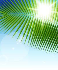 Wall Mural - Palm leaf on blue sky and sun beams