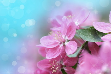 Beautiful Flowers Border.Floral design