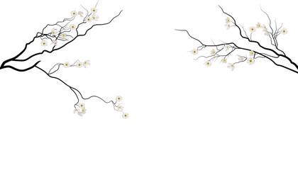 sakura branches with white flowers