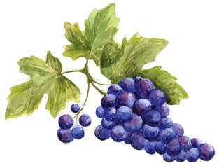 Picture - bunch of grapes
