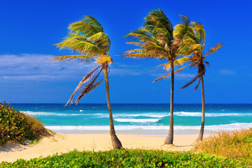 Wall Mural - The beach in Cuba on a beautiful summer day
