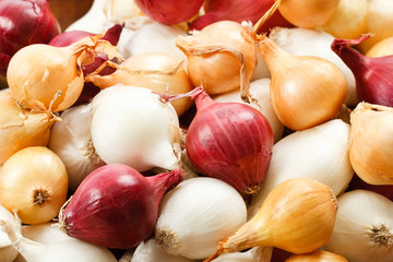 Close Up Of Colorful Pearl Onions