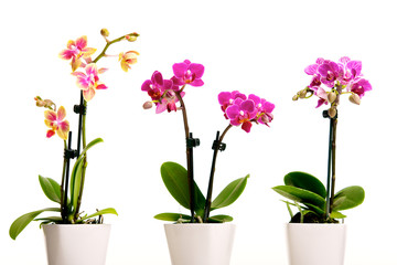 Tuinposter Orchidee Pink Flower Orchidee