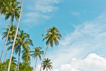 Palms on sky background, Banyak Archipelago