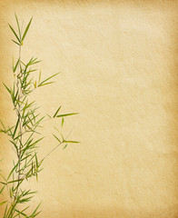 branches of a bamboo on old paper background.