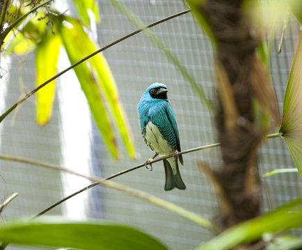 Blue bird in San Diego zoo.