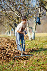 Kid cleaning in an walnut orchard