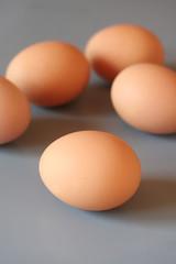 cinque uova su sfondo grigio